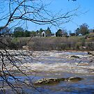 Hollywood Rapids in March by Patricia Motley