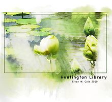 Huntington Library Water Lilies by Bryan W. Cole