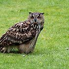 Eurasian Eagle-owl by Gili Orr