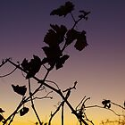 Sunset & Vine by Kazzii