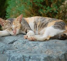 Cat tired and sleeping shhh.... by walterericsy
