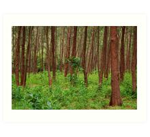 Forest and bushes in Zambales, Philippines Art Print