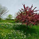 HIghland Park by Jeff Palm Photography