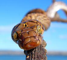 Madagascan Tree Snake by Robbie Labanowski