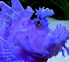 Purple Scorpionfish by Robbie Labanowski