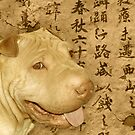 Chinese Shar Pei by Beverly Lussier
