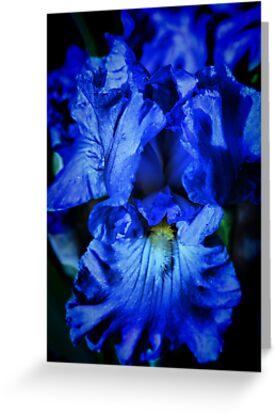 Rhapsody in Blue by Barbara  Brown