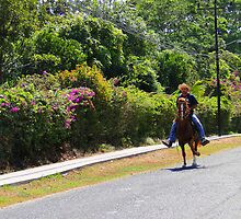 Fancy Horse-Steppin', El Valle, Panama by Al Bourassa