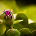 Flower Budding by Jon Yager