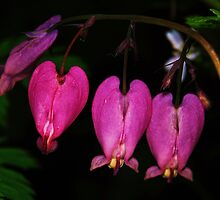 Wild Bleeding Hearts by Tori Snow