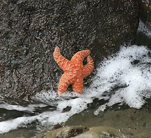 Sea Star in a Tidal Pool by CatrinaM