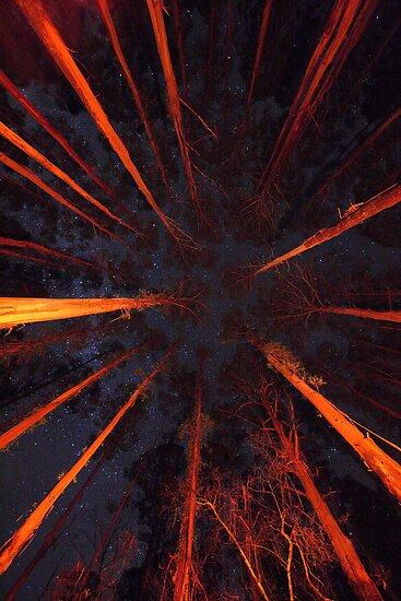 Forest Constellation by Donovan wilson