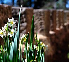 Flowers By The Wall by Bill Fonseca