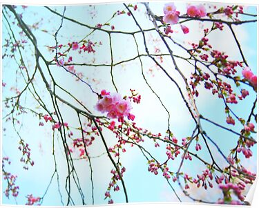 Japanese Blossom by Stephanie Hillson