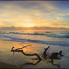 Branch on Sunrise by Tyhe  Reading