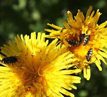 Spring Bugs by Bellavista2