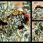 Iron-Cross Blister Beetle ~ Collage by Kimberly P-Chadwick