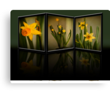 Winter Daffodils  Canvas Print