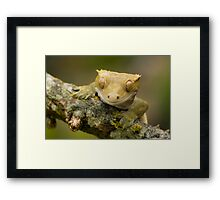 The happy gecko Framed Print