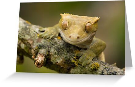 The happy gecko by Angi Wallace