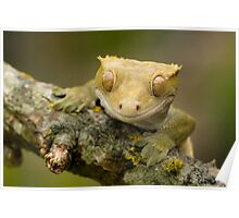The happy gecko Poster
