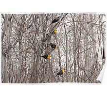 All Blackbirds Poster