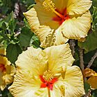 Hello Sunshine, Hibiscus by Kelley Shannon