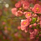 Spring Bloom II by Stephen Rowsell