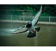 Pigeon in flight - Freedom PT 2.0 Photographic Print