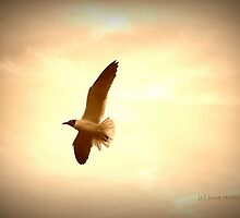 Soaring Gull by June Holbrook