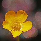 Buttercup Bokeh by Tamara Brandy