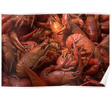 Our Mud Bugs. Poster