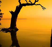 Dancing Tree by Jeff Holcombe