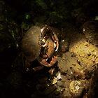 Crab Dancing by Morgan Wade