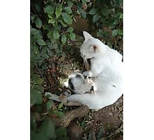 white cat Photographic Print