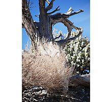 Tumbleweed Photographic Print