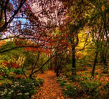 Autumn Leaves - Mount Wilson, Blue Mountains - The HDR Experience by Philip Johnson
