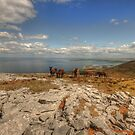 Burren Donkeys by John Quinn