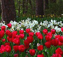 Spring Symphony I by Lisa G. Putman