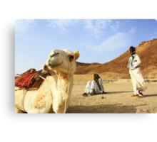 Camel and Bedouin boys, Wadi Gamal, Egypt Canvas Print