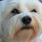 friends dog bailey by francesm