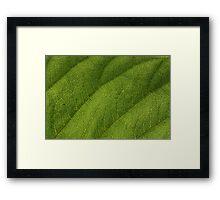 Leaf 0550 Framed Print
