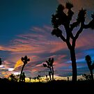 Winter Sunset - Joshua Tree, California by Bill Freeman