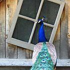 Peacock by Starsania