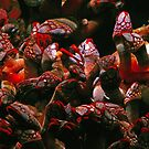 Red Goose Barnacles by James  Birkbeck Animals