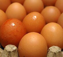 egg by bayu harsa