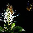 Flutterbies by ClareDeLaLune