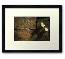 Flowers in Thailand Framed Print