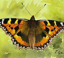 Tortoiseshell Butterfly by FranEvans