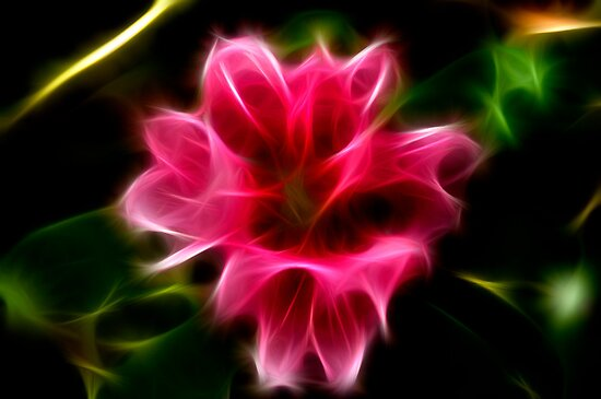 Fractalius Rhododendron by David J Knight